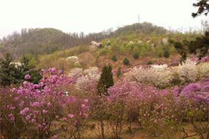 ウォンミ山は標高16.7M