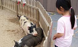 子供が喜ぶ釜山の穴場スポット
