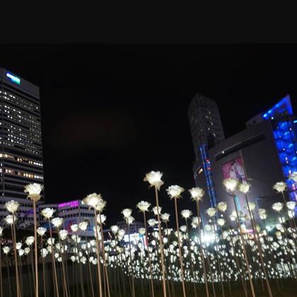 LEDのバラ