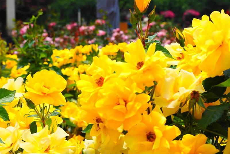 世界中の植物約1300種類